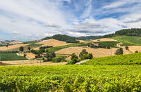Hills and vineyards of Piedmont, Italy
