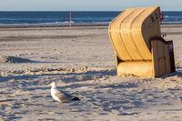 Möwe und Strandkorb auf Juist