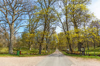 Country road avenue at a parkland in spring