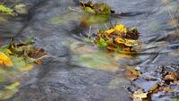 Bachlauf im Herbst