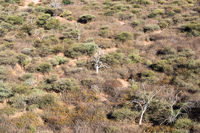 Namibian savanna woodlands view from the top of Waterberg Plateau