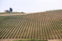 Weinberg mit Steinhütte auf einem Hügel, Toskana, Italien