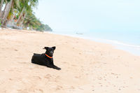 Black dog lay and relax on deserted sand tropical beach