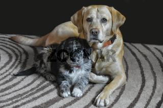 Hundefreunde II