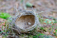 empty bird's abandoned nest lies on the ground