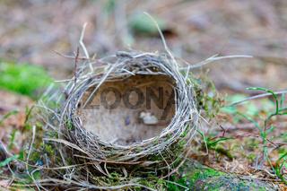 empty bird's abandoned nest lies on the ground