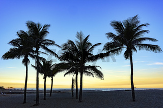 Coconuts trees at sunset