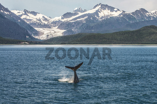 Baby Humpback Whale and Alaskan Landscape with Glacier
