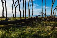 Küstenwald an der Ostsee bei Nienhagen.