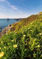 Ocean View over Iceplant Flowers