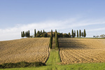 Bauernhof mit Zypressen, Toskana, Italien, Europa, Farm with cypresses, Tuscany, Italy, Europe