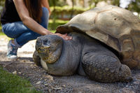 Young Woman Touching Giant Turtle in Arequipa, Peru