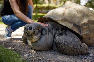 Young Woman Touching Giant Turtle in Arequipa, Peru