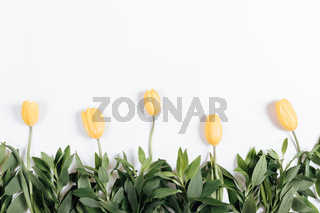 Row yellow tulips on a white background, flat view