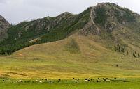 Typische Landschaftsform mit Grasland für Yaks im Gorchi-Tereldsch-Nationalpark, Mongolei