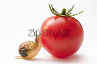 Schnecke mit Tomate snail with tomato