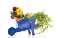 Wooden wheel barrow with vegetables