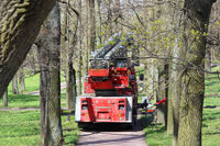 workers cut branches and trims a tall trees using the lift in the park