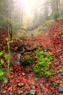 mountain spring in the autumnal forest