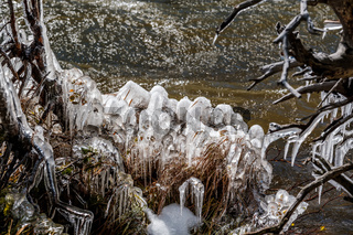 Icicles on trees and grass by lake