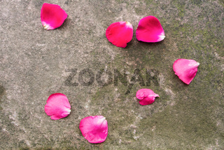 Stone background with moss and fallen dark pink rose petals, Walldorf, Germany.