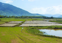 Rice field and rural landscape background
