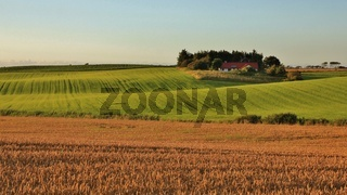 Idyllic rural landscape in Jylland, Denmark. Beautiful shaped fields and hills. Summer scene.