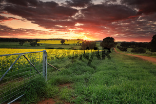Sunrise farmlands Australia
