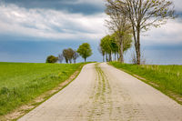 Road in nature in spring
