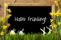 Narcissus, Easter Egg, Bunny, Hallo Fruehling Means Hello Spring