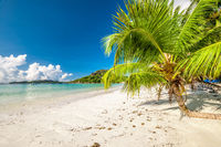 Beautiful beach with palm tree at Seychelles