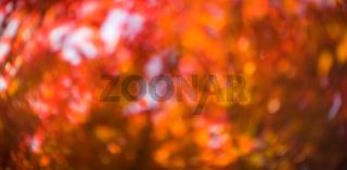 defocused red leaves, perfect autumn background