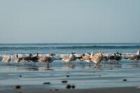 group of seagulls / sea gull birds on beach