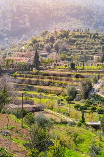 Wine mountains close to Valldemossa (Majorca)
