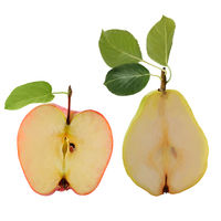 Illustration of apple and pear