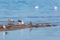 Shorebirds on a sandy beach by the sea