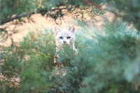Cat in the bushes