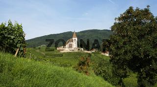 Kirche in den Weinbergen in Hunawihr