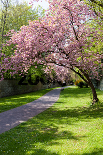 Soester Gräfte im Frühling