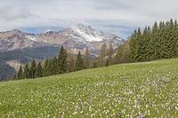 Frühling in den Karnischen Alpen