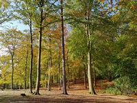 Buchenwald im Herbst im Gegenlicht