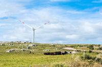 Gaucho herding cows near windmills on the Cerro Catedral in the Maldonado Department