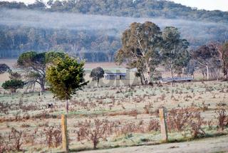 farmland in the morning