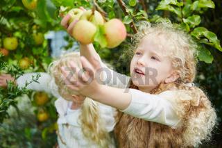 Zwei Mädchen pflücken Äpfel
