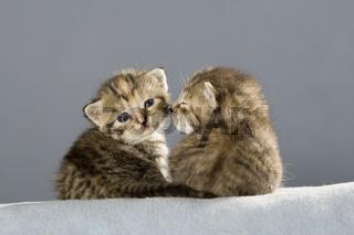 Katzenbaby 2 Wochen, Kitten 2 weeks