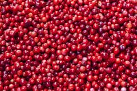 Background of raw organic red cranberries