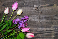 tulips and lilac background