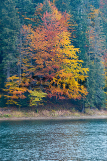 Lake Synevyr autumn view.
