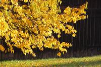 Obstbaum im Herbst