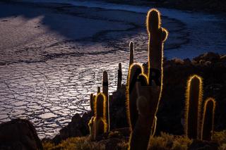 View from Isla Incahuasi, Uyuni, Bolivia